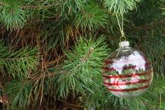 与红色条纹的透明圣诞节球在蓬松杉木branc 库存照片