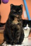 与红色猫的黑色 库存图片