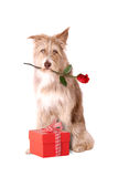 与红色玫瑰和礼物的狗 免版税库存图片