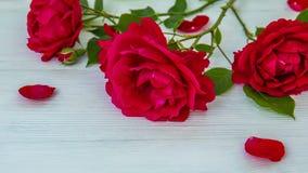 与红色玫瑰的浪漫背景在木桌上,顶视图 股票视频