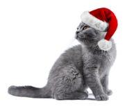 与红色白色圣诞节圣诞老人帽子的小猫 免版税库存图片