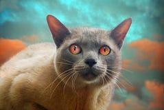 与红色眼睛的猫 免版税库存图片