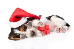 与红色礼物盒和圣诞老人帽子的逗人喜爱的贝塞猎狗小狗 查出在白色 库存照片