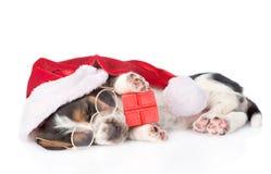 与红色礼物盒和圣诞老人帽子的逗人喜爱的贝塞猎狗小狗 查出 免版税图库摄影