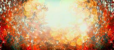 与红色秋叶和阳光的美好的秋天天,室外自然背景,横幅 库存图片