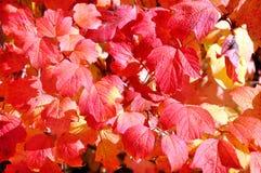 与红色秋叶的抽象背景 库存图片