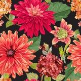 与红色翠菊花的无缝的样式 织品纺织品的,墙纸花卉背景,包裹 作者开花i绘画照片水彩 皇族释放例证