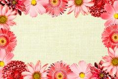 与红色花拼贴画混合大丁草、菊花、大丽花、樱草属、装饰向日葵和老布料的葡萄酒框架 免版税库存图片