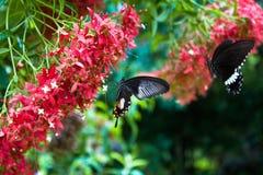 与红色花的两只蝴蝶 免版税库存图片