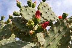 与红色花的仙人掌 库存图片