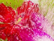 与红色花的抽象在冰 免版税库存照片