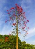 与红色花的树在天空是背景 免版税库存图片