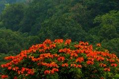 与红色花的树在森林里 免版税库存照片