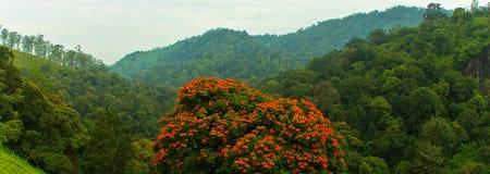 与红色花的树在森林里 库存照片