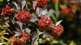 与红色花的美好的分支 与轻轻地挥动在微风的红色花的树 库存照片