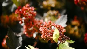 与红色花的美好的分支 与轻轻地挥动在微风的红色花的树 免版税图库摄影