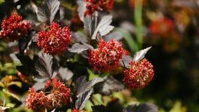 与红色花的美好的分支 与轻轻地挥动在微风的红色花的树 免版税库存图片