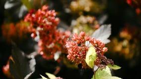 与红色花的美好的分支 与轻轻地挥动在微风的红色花的树 库存图片