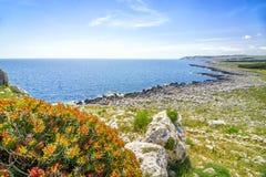 与红色花的美好的地中海风景,意大利 库存图片