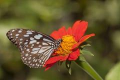与红色花的蝴蝶 免版税库存照片