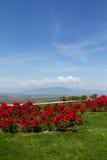 与红色花的风景 免版税库存照片