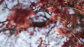 与红色花的结构树 免版税库存照片