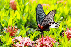 与红色花的蝴蝶 免版税图库摄影