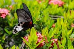 与红色花的蝴蝶 免版税库存图片