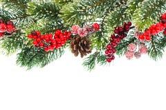 与红色装饰的圣诞树分行 免版税库存图片
