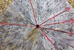 与红色辐形箭头的树干部分 免版税库存图片