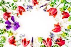与红色郁金香、黄色花、紫色虹膜、在白色背景和瓣的花卉框架隔绝的分支、叶子 免版税库存照片