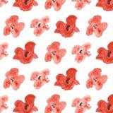 与红色鸦片的无缝的样式在白色背景 库存图片