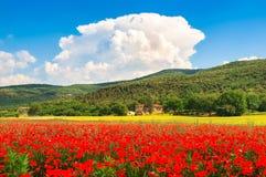 与红色鸦片花和传统农厂房子的领域的托斯卡纳风景 免版税库存照片