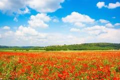 与红色鸦片花和蓝天的领域的美好的风景在Monteriggioni,托斯卡纳,意大利 免版税库存照片