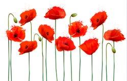 与红色鸦片花的抽象背景 库存照片