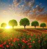 与红色鸦片领域和树的春天风景 免版税库存图片