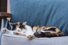与红色,白色和交通事故多发地段的逗人喜爱的猫 睡眠宠物 天休息猫天 免版税库存照片