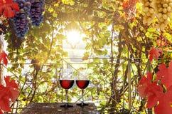 与红酒的酒树荫处 库存照片