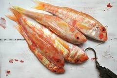 与红鲻鱼鱼的静物画在葡萄酒白色板材 免版税库存图片