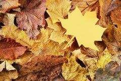 与纸叶子的槭树事假 框架充分的宏观薄饼射击 库存照片