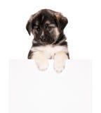 与纸张的小狗 免版税图库摄影