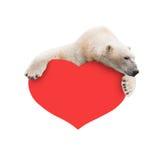 与纸心脏的北极熊在他的爪子 免版税库存图片