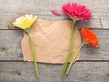 与纸的三朵五颜六色的大丁草花拷贝空间的 免版税库存图片