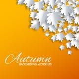 与纸裁减槭树的秋天背景 库存照片