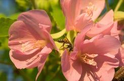 与纸质黄蜂的橙色花 免版税库存照片