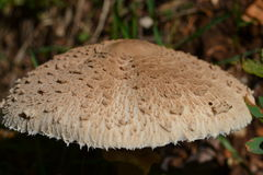 与纹理的日伤蘑菇 免版税库存图片
