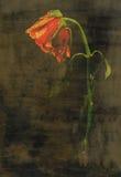 与纹理的红色玫瑰 免版税库存图片