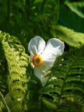 与纹理背景自然蕨叶子和装饰物花水仙的宏观照片 库存图片