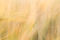 与线优势的被弄脏的黄色抽象背景  库存照片