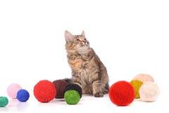与线团的滑稽的猫 库存图片